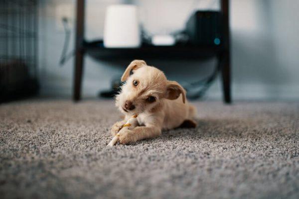 Voordelen van een tapijtvloer