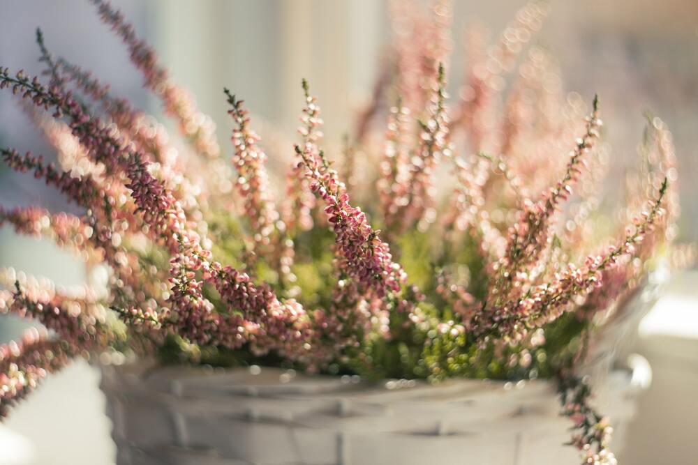 leukste plantenbakken in tuin